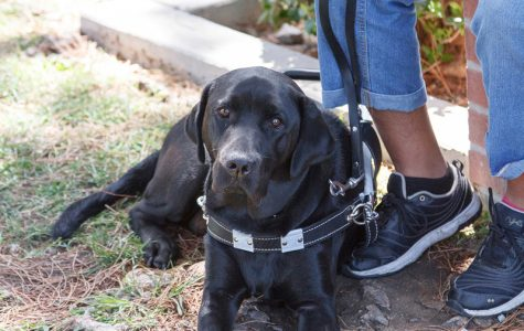 Use of service dogs at BC on the rise