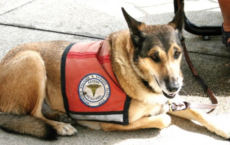 How to recognize a service dog at BC