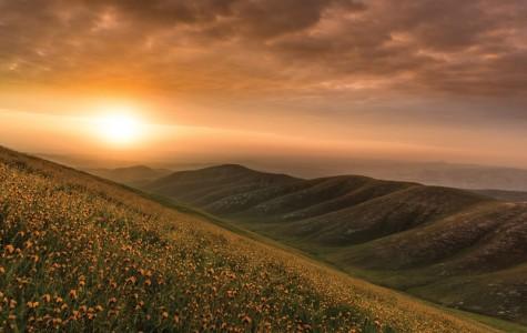 Wildflowers of Kern County