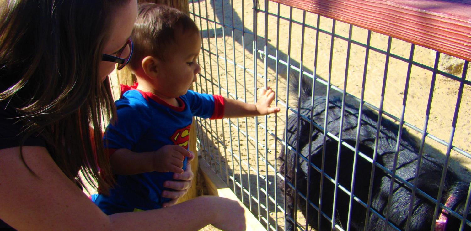 Matthew, a child dressed in a Superman costume, explores the domestic animals' exhibit at the CALM zoo.