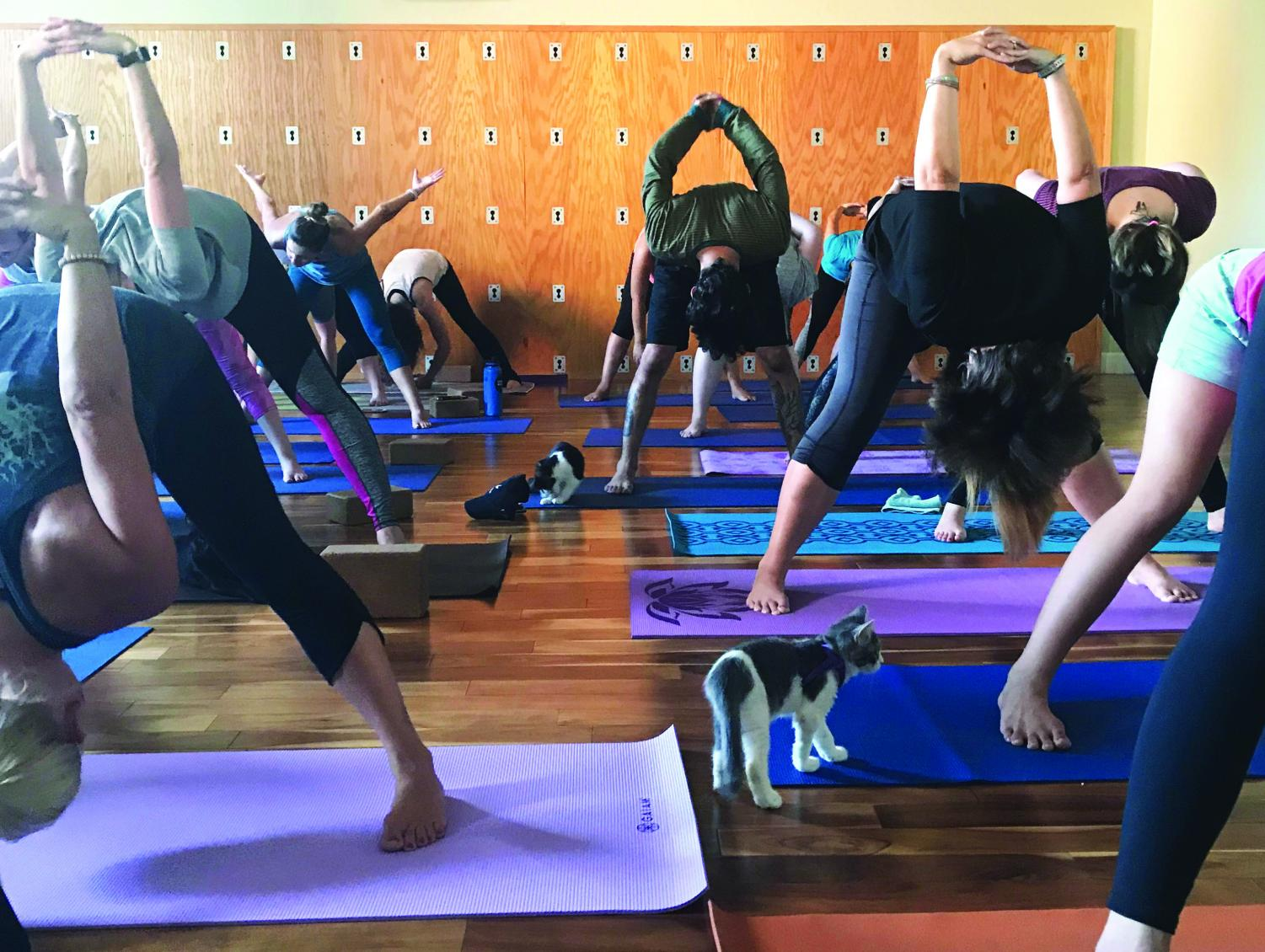 Innerbody Works Yoga Hosts Cat Yoga In Downtown Bakersfield The