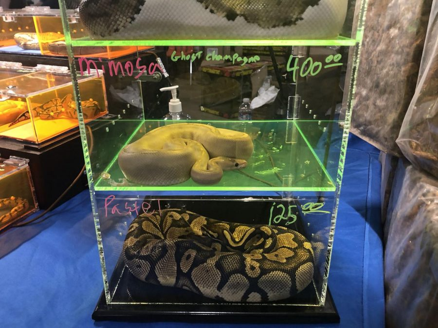 1.Many rare and unique breeds of different species were available for sale and ranged in price.