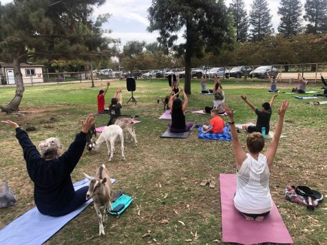 Participants doing yoga during Goat Yoga 4.0 on Oct. 10.
