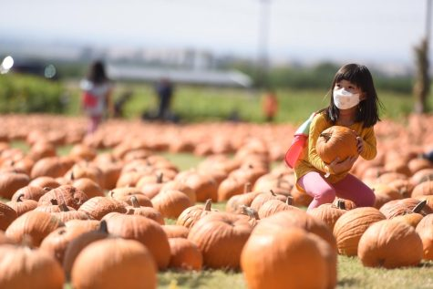 A girl picks up her pumpkin from the pumpkin patch at Murray Family Farms.